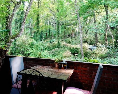 森林風下午茶,慵懶露營也可以~新竹6號花園