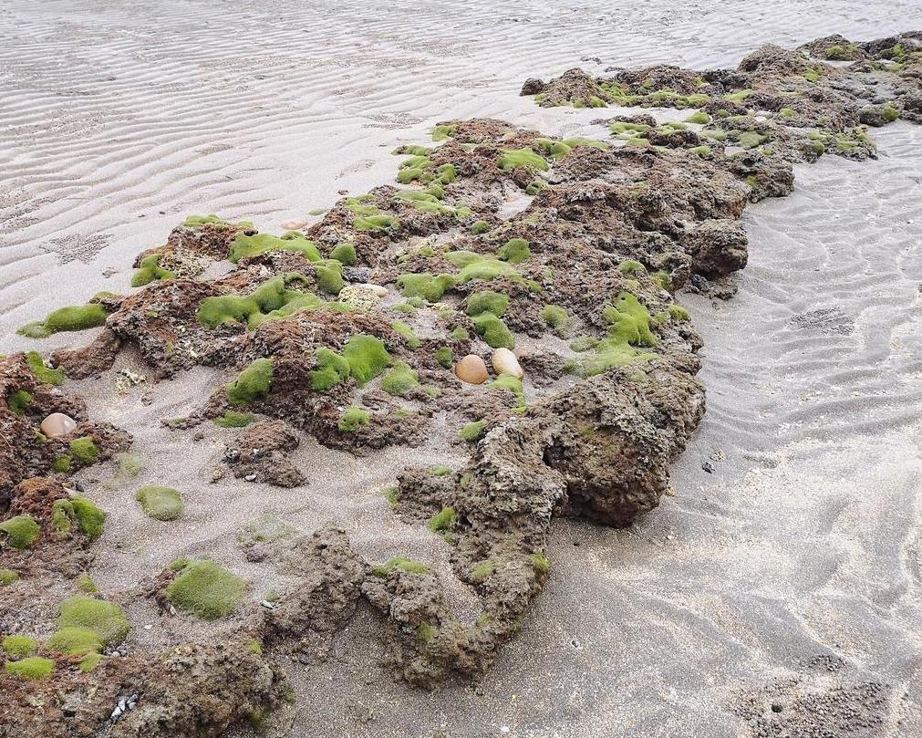 探索藻礁生態,認識海洋生物育嬰房~桃園藻礁生態環境教室